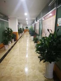 重庆植物租赁公司森海园