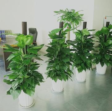 办公室绿植出租重庆